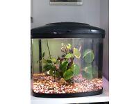 Interpret Fish Pod 48L Aquarium