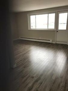 Renovated Apt in Central Location- Pet Friendly!