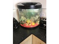 Reduced! 40 Ono 50l corner fish tank with light 2 filters stones and some ornaments