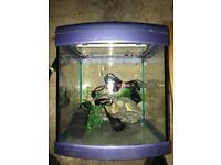 Small tropical fish tank