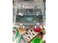 Hamster Cage 🐹 Accessories Bedding Toys Food Bowl