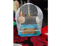 10 month old male canary with cage etc