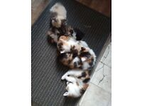 Incredibly friendly and beautiful kittens for sale