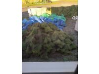 FREE TURF TO COLLECTOR ASAP APROX 40SQM