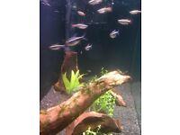 Aquarium live plant cuttings