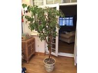 5ft artificial tree with plant pot
