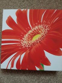 3 pictures of orange flowers