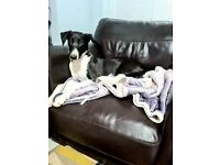 6 month old whippet mixed breed needs loving home