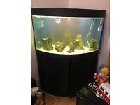 150 litre corner fish tank with loads of accessories