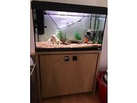 Fish tank...Fluval Roma 125 with cabinet