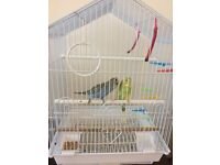 TWO BUDGIES AND CAGE FOR SALE (ready to leave now)