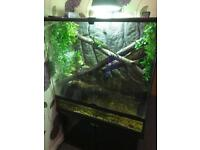 Sensible Offers Please! Chinese Water Dragons and Set Up For Sale