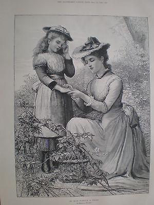 Marcella Rose (No Rose Without a Thorn Marcella Walker 1894 print)