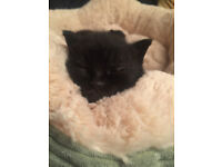 Must be seen - 2 amazing, gorgeous kittens looking for their forever homes