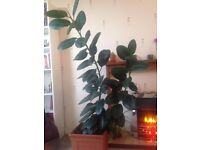 House or Apartment Indoor Plants