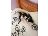 Last kittens looking for home