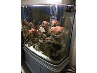 Marine fish tank massive good upgrade