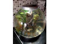 Bio orb tank