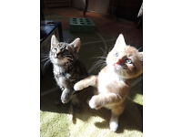 kittens with great personalities