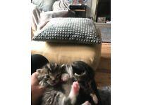 Kittens taking deposits