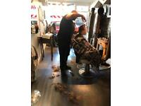 Barber required in busy clifton barber shop