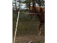 Stunning horse for sale