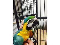 Super tame macaw