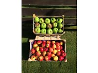 Delicious Eating & Bramley Cooking apples