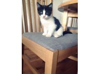 A gorgeous kitten for sale !