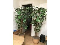 Artificial Plants x 4 for Sale - Popular in Offices, and Medical/ Dental Practices
