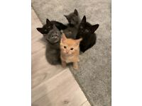 Kittens look for there forever homes