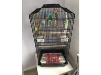 2 tame budgies and cage