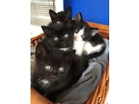 Kittens for sale lively and friendly