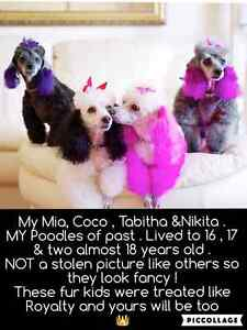 DOGS ON HOLIDAY@'My Pawsitive Palace' Pampering your dog MY HOME Runaway Bay Gold Coast North Preview