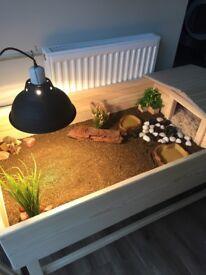 Tortoise Table, Stand & Accessorises