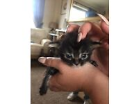 Kittens and cats FREE to a good home