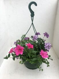 MIXED HANGING BASKETS **Free local Delivery**