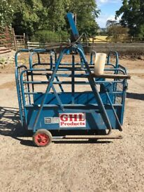 Farm lamb weigh crate agricultural