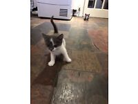 Kittens Available for Collection 12th December 2016