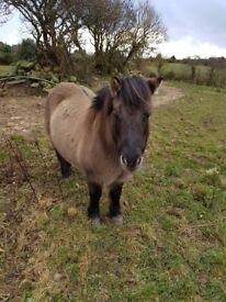 Very lovely ponie