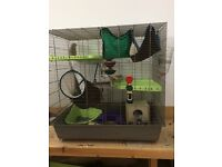 2 ADORABLE AND FUN PET RATS