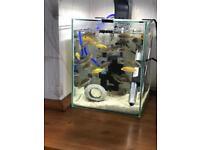 Malawi cichlids fry fish and baby plecs