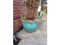 Garden flower pots (large)