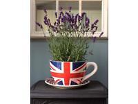 New giant ceramic tea cup planter