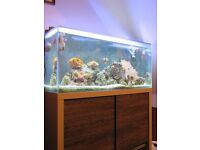 Marine Reef tank for sale