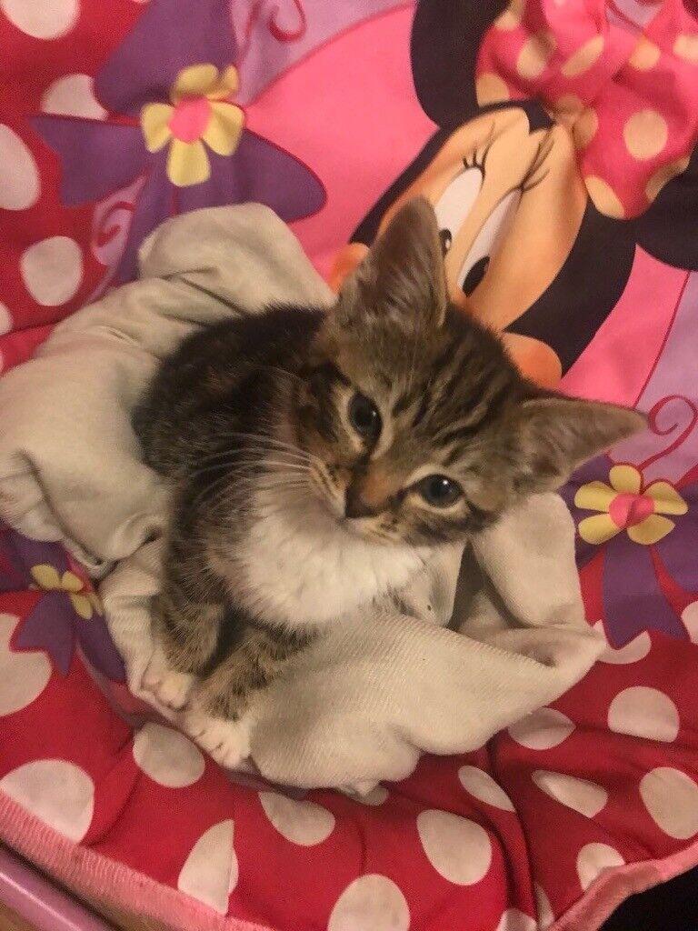 Kitten for Sale....