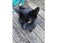 Found black cat in East Kilbride