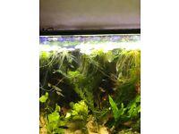 Tropical Aquarium Big Plants*Home Delivery*