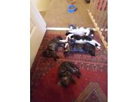 Kittens! 5 cute balls of fluff need future human servants....