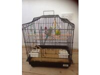 Two budgies with cage for sale